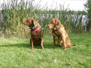 Brady & Cedar, September 2007